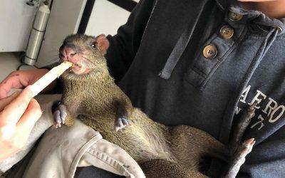 mujer sosteniendo animal roedor y mano alimentando al animal