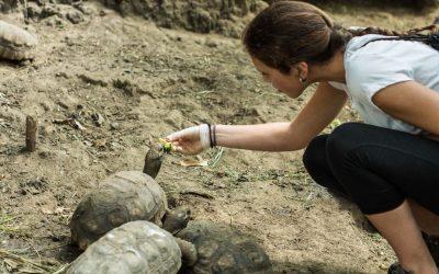 mujer alimentando a dos tortugas en bioparque. voluntariado