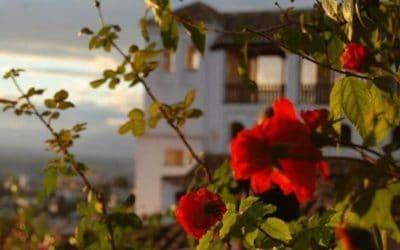 universidad de alicante, flor en primer plano