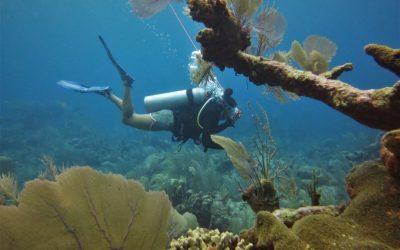 buzo al fondo y corales en primer plano. conservación marina