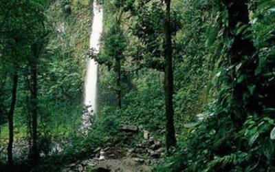 catarata en selva con arboles verdes. estudiar en costa rica