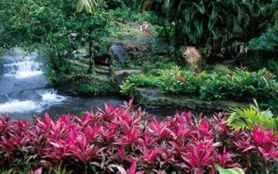 plantas de hojas violera, con rio por detras y arbustos verdes