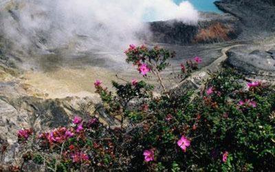 flores violetas y arbusto con volcan por detras con ojo de agua