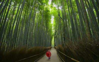 mujer con paraguas rojo caianod por camino en bosque de bambues