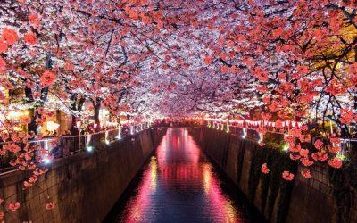 rio con caminos a los costados y con arboles de flores rosas