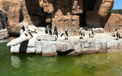 pingüinos en rocas por saltar al agua