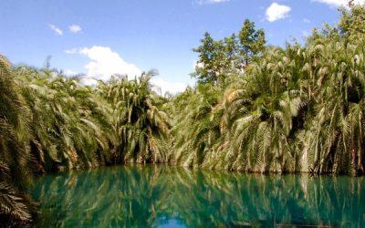 lago turquesa con palmeras y arbustos verdes