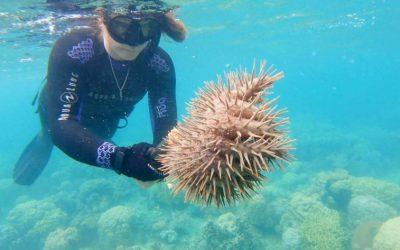 buzo bajo el agua agarrando en sus manos coral