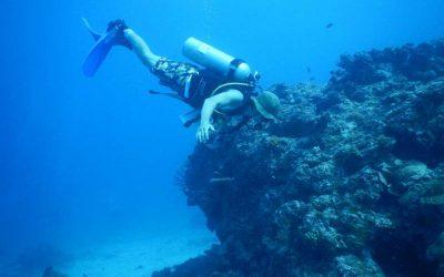 buzo bajo el agua . pasantía en conservación marina