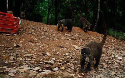 animales salvajes. rescate de animales salvajes costa rica