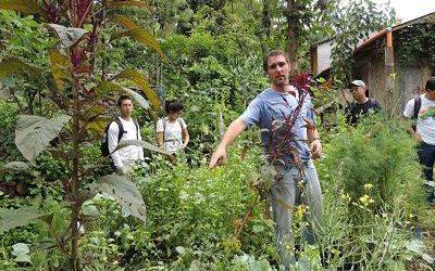 hombre trabajando en medio de la naturaleza. voluntariado en agricultura sostenible en guatemala