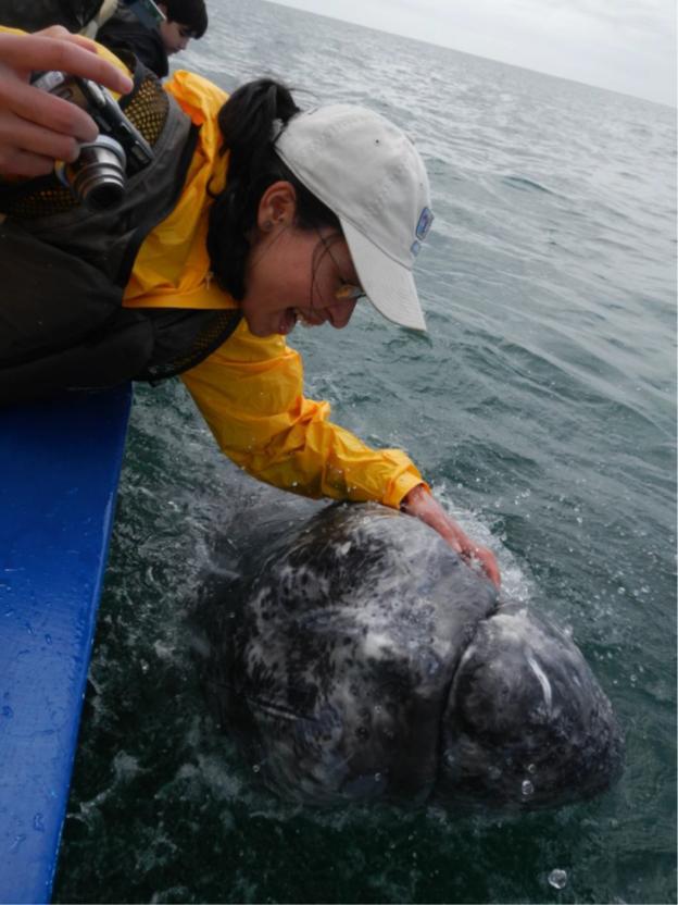 interacción ballena gris