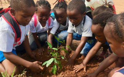 Pasantia sobre sostenibilidad e impacto social en Zambia
