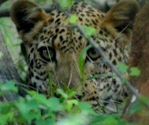 Investigación del jaguar en Costa Rica