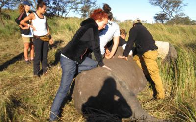 Veterinaria. Pasantía con animales en Sudáfrica