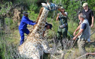 Veterinaria. Pasantía en Sudáfrica