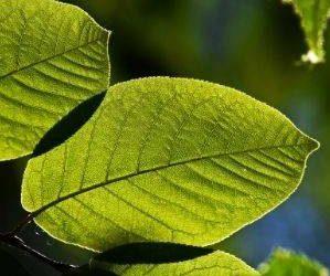 Emprendimiento sostenible. Curso Online